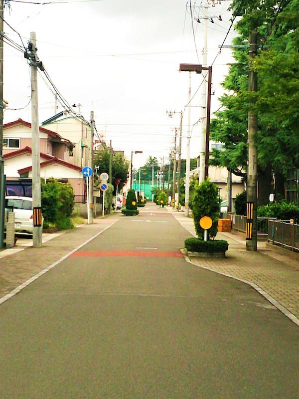 デコボコの道と植木(渡邊真子撮影)