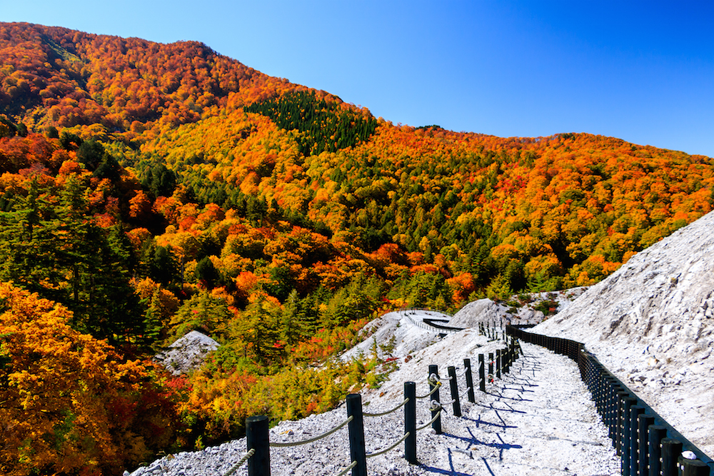 無機質な川原毛地獄とは対照的に周囲の山々は紅葉に輝いていた(佐瀬雅行撮影)