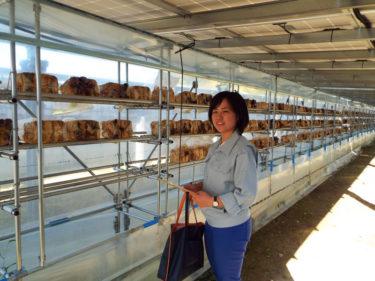 太陽光パネルの下は日本最大級のキクラゲ生産地!?「営農型」発電に全国から注目
