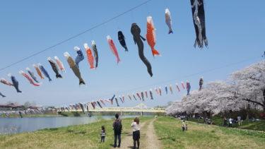 鯉のぼりと空を泳ぐ「うなぎ」と「なまず」岩手県北上市のナゾに迫った