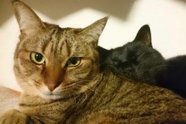 賃貸でも猫は飼える!仙台初『猫と人をつなぐ』アパート