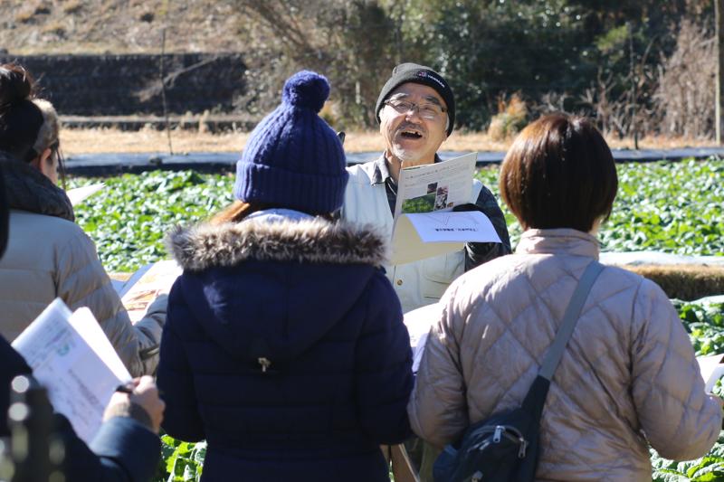 西岡道則さんの畑で大和の伝統野菜「下北春まな」の収穫体験