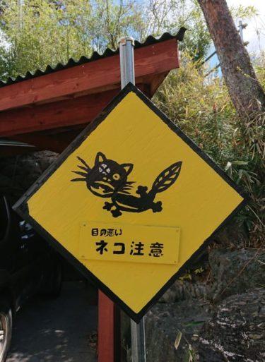 日本でここだけの道路標識!?「愛猫を守りたい」飼い主の思い