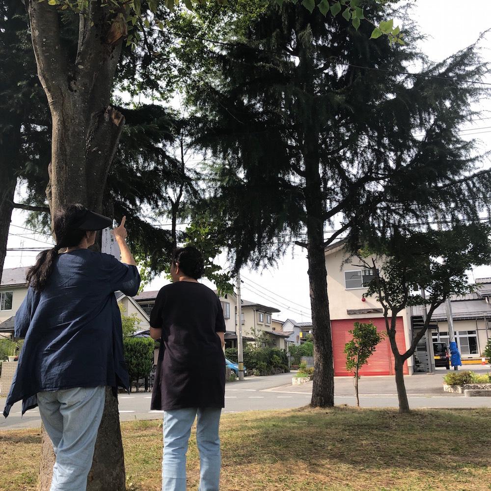 トラフズクを探す近隣住民たち