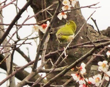 【秋田・草生津川カメラ散歩】草生津川の春