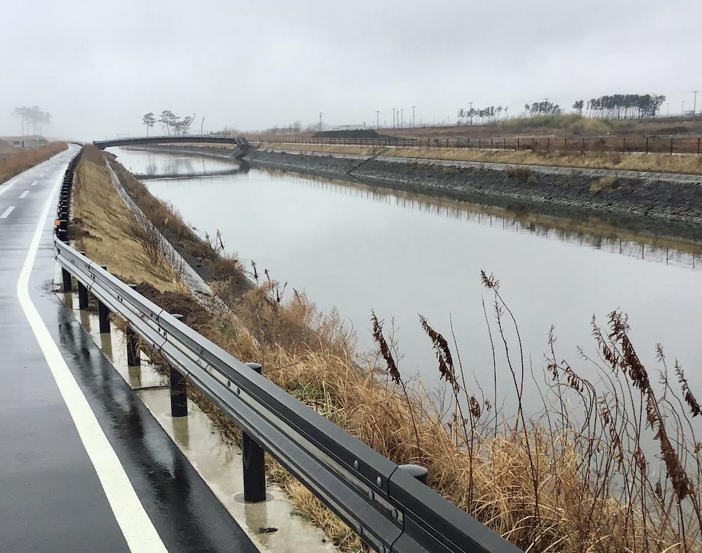 緑陰が失われた貞山運河