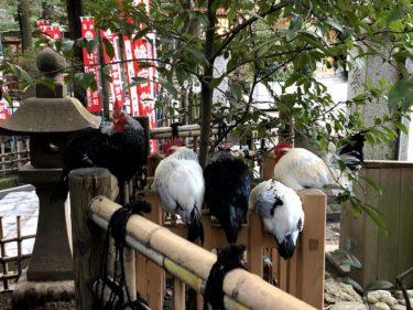 大崎八幡宮になぜ「鶏」がいるのか その謎を追った