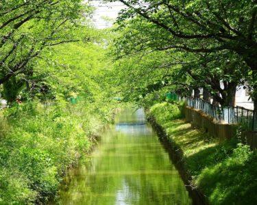 【秋田・草生津川カメラ散歩】心を洗うような新緑