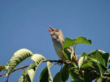 【秋田・草生津川カメラ散歩】野鳥、いろんな表情