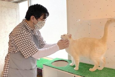 コロナ禍で中断した猫たちの里親探しが再開 仙台の「保護猫シェルター」はいま