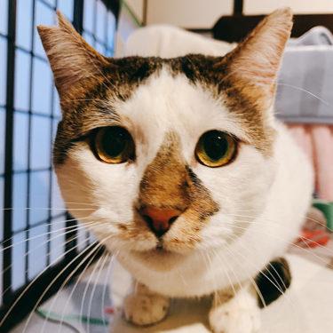 仙台市で多頭飼育現場からレスキューされた猫の譲渡会が開催