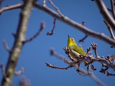 寒風に負けない野鳥たち 秋田市